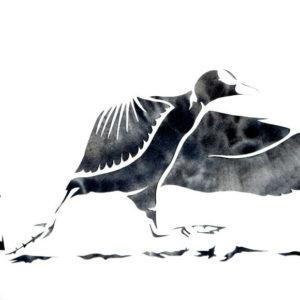 Foulque macroule (aquarelle+pochoir, 23 x 31 cm)