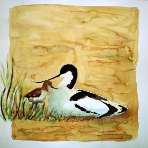 Avocette_poussin_Recurvirostra_avosetta_Small